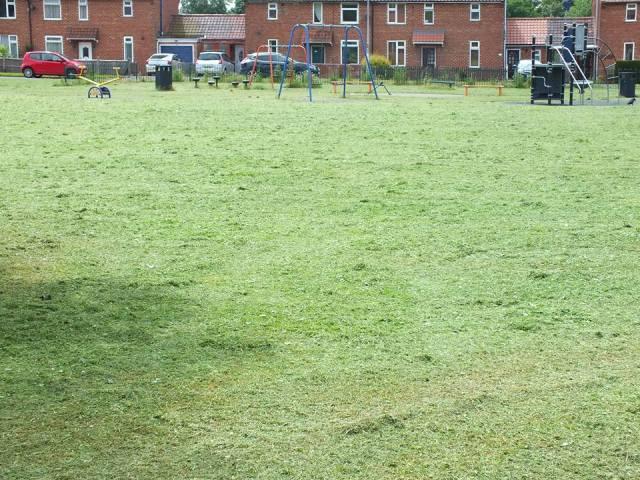 Deno - Grass Cut