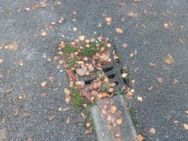 the-lilacs-blocked-drain